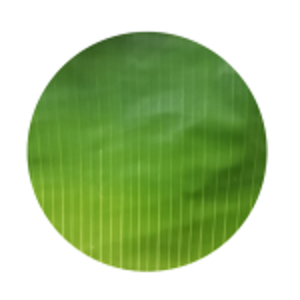 round-shaped-banana-leaf-500×500