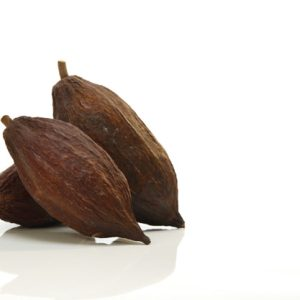 Cacao fruit on white background, close up